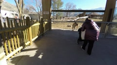 A mother and toddler in stroller looking at lions in zoo 4k Stock Footage