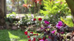 Soft Focus video of flowers filmed in daytime Stock Footage