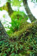 many parasitic on tree trunk look abundant natural - stock photo