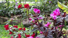 Nice pink/red flowers shot in daytime Stock Footage