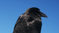 1080p, brilliant closeup of a raven Stock Footage