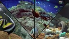 Species of Fish with a Spotted Eel and Zebra Fish. Stock Footage