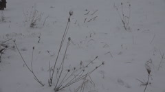 Dry grass covered snow heavy winter season cold daytime wild field rural pasture Stock Footage