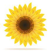 Sunflower vector illustration Piirros