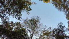 Sky through jungle trees, steadicam shot - stock footage