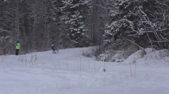 Skijoring in Karelia on stage of the World Cup Stock Footage
