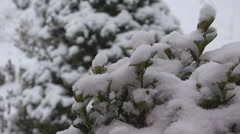 Close up snow flake fall green leaf bush winter cold weather calm storm day time Stock Footage