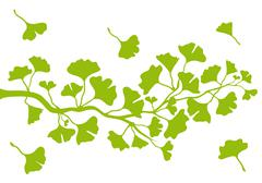 Ginkgo branch with leaves, vector Stock Illustration