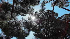 Sun shining through needles and leaves of trees. 3 shots in a sequence, close-up Stock Footage