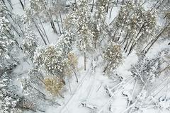 aerial view of winter forest - stock photo