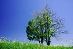 Dead and alive trees Stock Photos