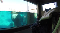 Mom, baby and toddler with stroller and seals at the zoo Stock Footage