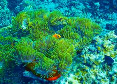 coral reef underwater background - stock photo