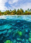Beautiful marine life Stock Photos