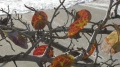 Waves crashing under sea grape leaves, 4K Stock Footage