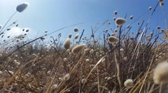 Grass moving in the breeze - Floral golden brown grass background Stock Footage
