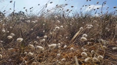 Floral golden brown grass background - Grass moving in the breeze - stock footage