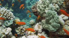 Colorful underwater reef with coral and sponges Stock Footage