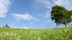 Green grass and white daisies Stock Footage