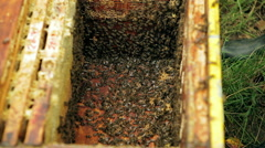 Bees in the hive. Stock Footage