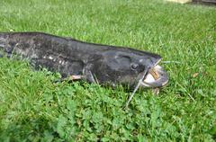 Water predator - stock photo