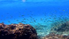 Underwater world of the adriatic sea in croatia Stock Footage