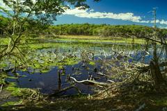 Swamps on Navarino Stock Photos