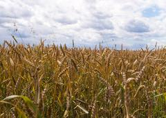 Summer sky and field - stock photo