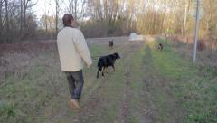 A man is walking with three dogs - stock footage