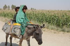 Donkey carrying afghan children (editorial) Stock Photos