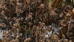 Plants Frozen To Death Stock Footage