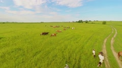 Horse herd graze on grass field at summer day. Aerial view Stock Footage