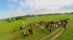 Quadrocopter flies above horse herd driven by herdsman Stock Footage