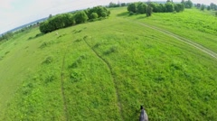 Many horses eat grass on field at summer day. Aerial view Stock Footage