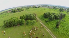 Herdsman drives horses by grass field with electric power line Stock Footage