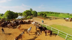 Horse herd in paddock on ranch with small pond at summer Stock Footage