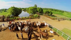 People walk among horses in paddock on ranch at summer Stock Footage