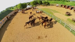 Many horses in paddock on ranch near small pond at summer Stock Footage