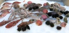 Octopus and other many fresh fish in the fridge Stock Photos