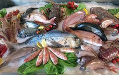 great white sea bream many saltwater fish in the italian restaurant - stock photo