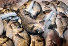 Bream caught fresh in the Mediterranean Sea at the fish market Stock Photos