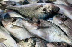 Bream caught fresh in the Mediterranean Sea Stock Photos