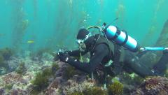 Underwater Photography Scuba Diver Kelp Bed - stock footage