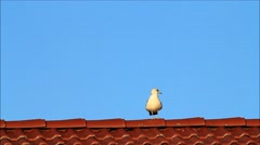 Sea gull alone on red tiled roof Stock Footage