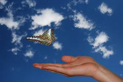 hand with blue sky and butterfly - stock photo