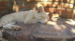 Cute cat sleeping on the steps to one of the Bagan pagodas Stock Footage