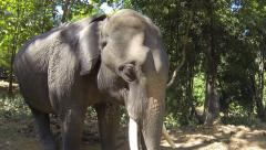 Asian elephant in Burma. Stock Footage