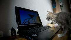 The Cat and the bird on the computer screen, Part 1 Stock Footage