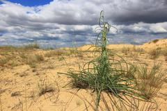 Flora in dunes on desert Stock Photos
