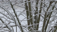 Tree And Bushes With Snow - stock footage